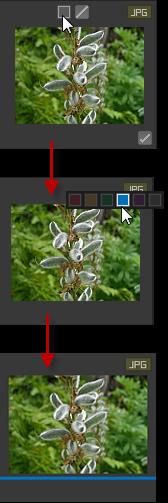 color_label_process