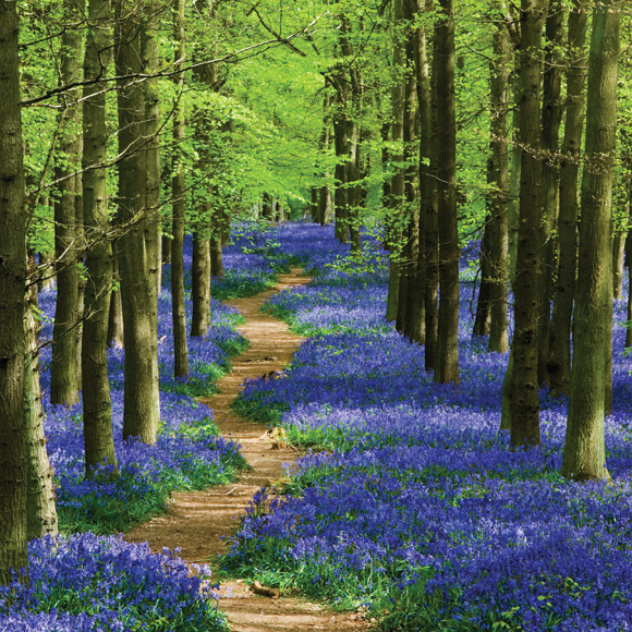 Spring-landscape-photography-tips-5-bluebells